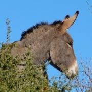 donkey_COLEGIOSANTACLAUS